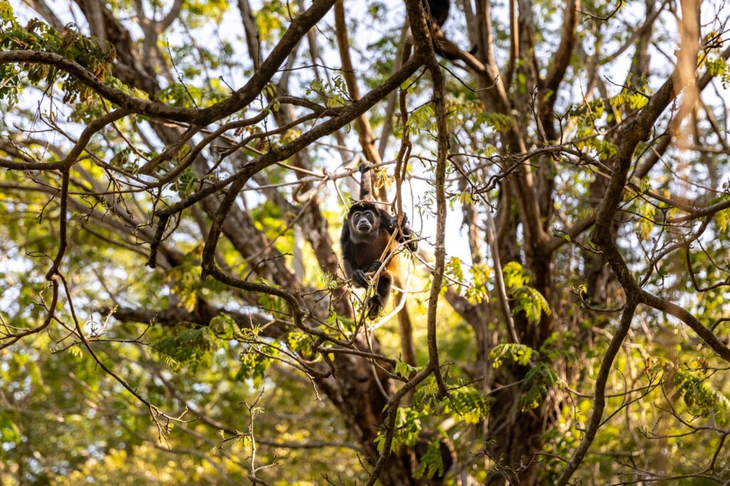 Costa Rica Bikepacking Howler Monkey