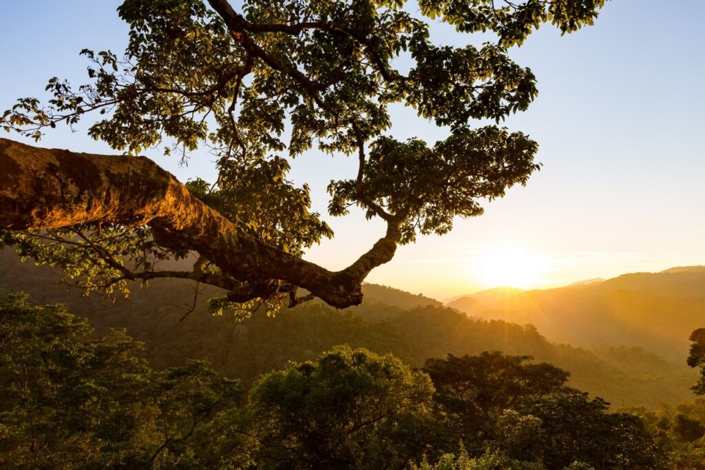 Gibbon Experience Treehouse in Laos